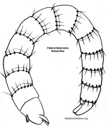 rabbit burrow drawing
