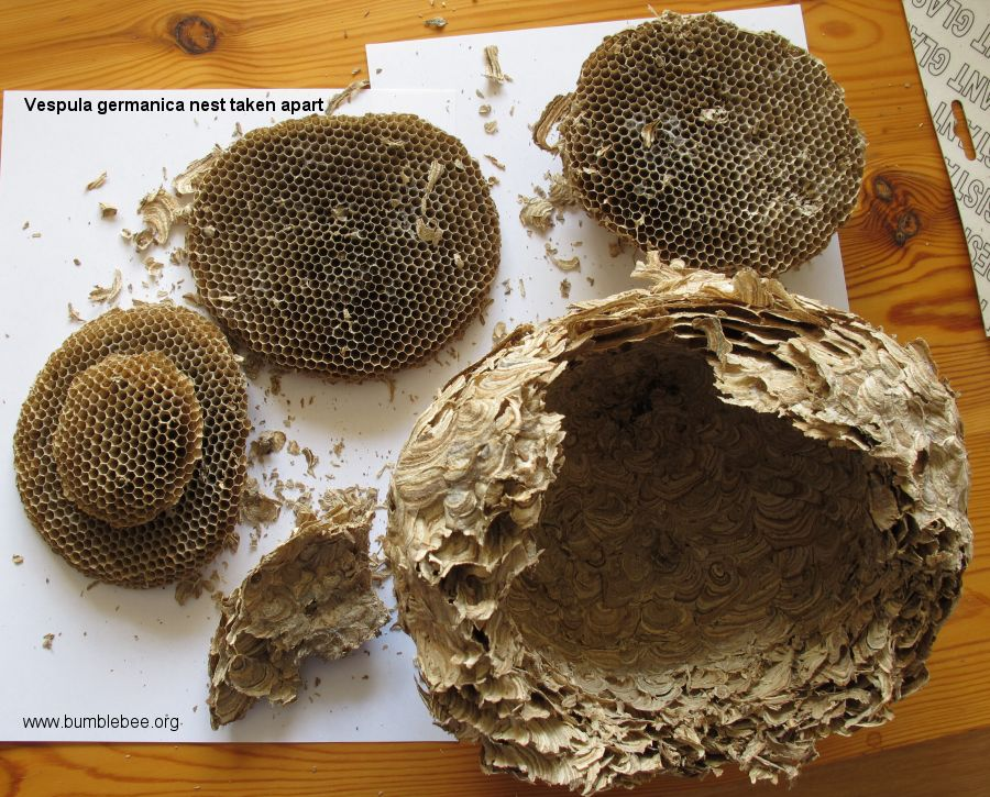 Wasp Nest Removal | Pest control Tonbridge | hfpestcontrol.co.uk