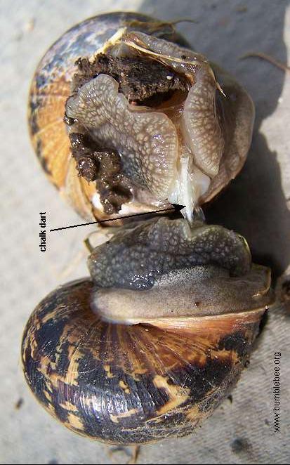 Gastropoda Snails Slugs Etc